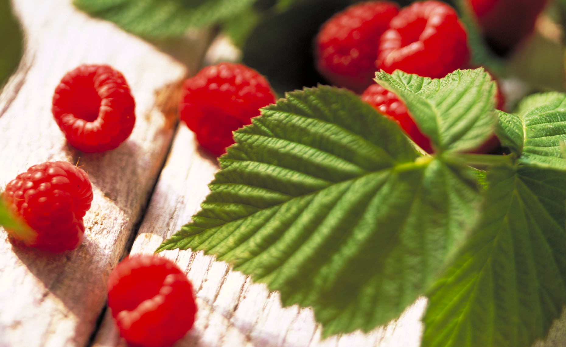 Food Photographer, Vegetable photography, Fruit photography | Pohuski Studios,  Fresh Raspberries