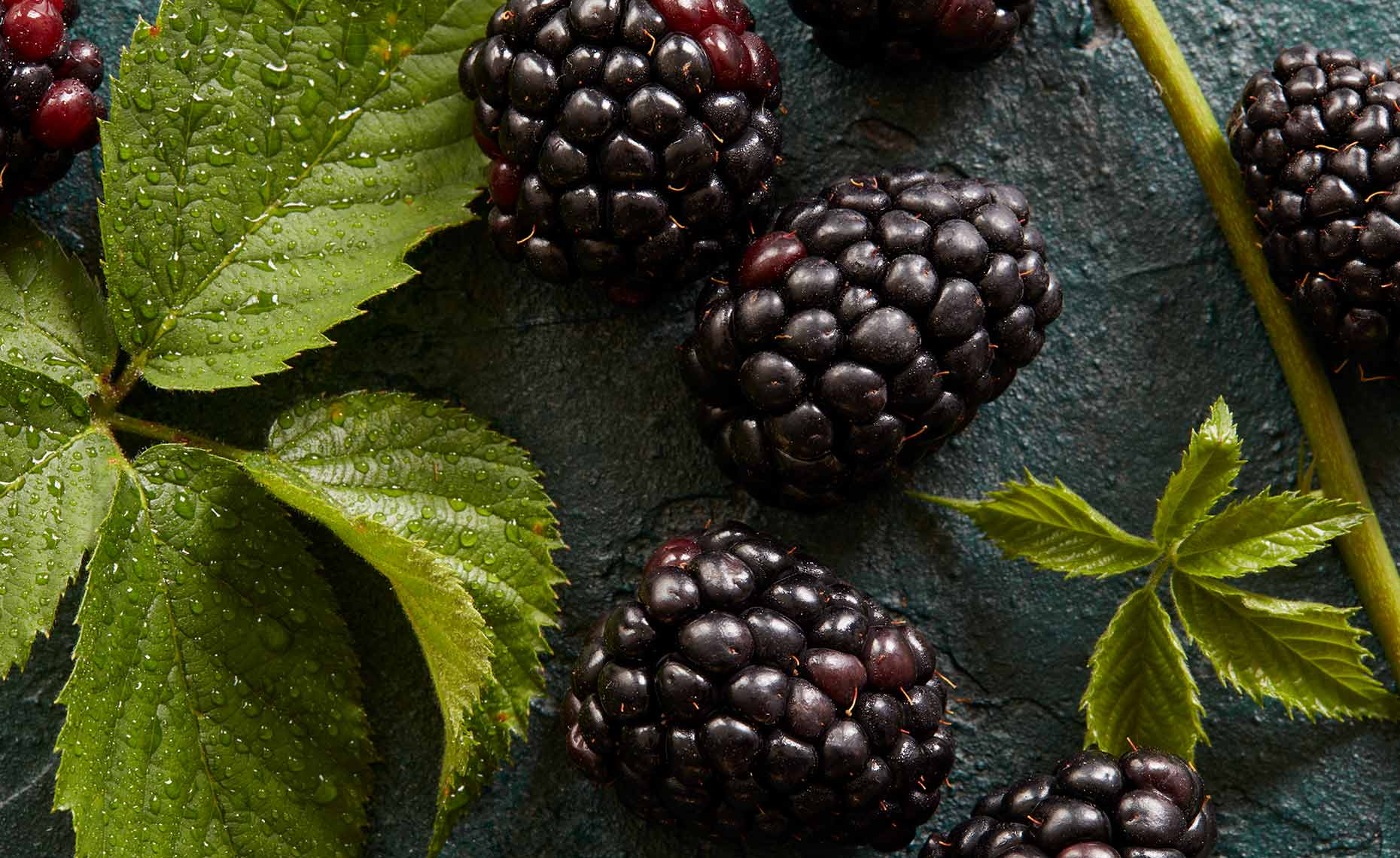 appetizers-fruits-vegetables-photographers-black-berries-96